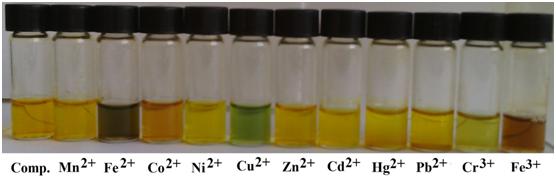 具有生物活性超支化PEI席夫碱对重金属离子的检测